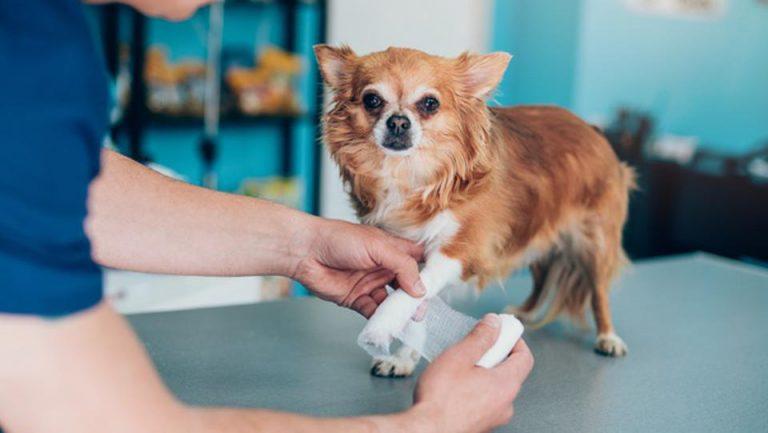 A man holding bandage dog on table